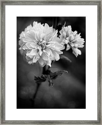 Kerria In Black And White Framed Print by Chrystal Mimbs
