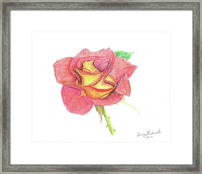 Ketchup And Mustard Rose Framed Print