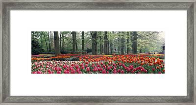 Keukenhof Garden, Lisse, The Netherlands Framed Print