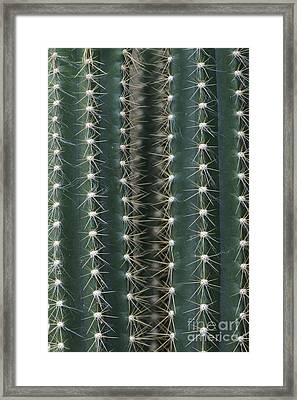Key Tree Cactus Framed Print by Tim Gainey