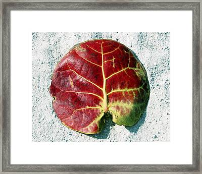 Key West Leaf In The Sand Framed Print
