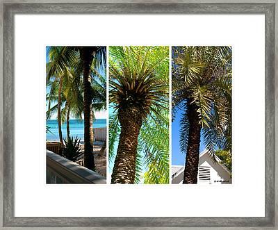 Key West Palm Triplets Framed Print