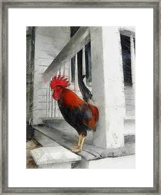 Key West Porch Rooster Framed Print by Michelle Calkins