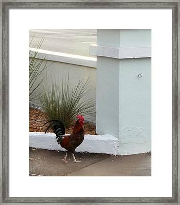 Key West Street Walker Framed Print