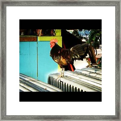 #keywest #instagood #photo #igers Framed Print