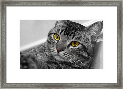 Kickin Back Framed Print by Craig Incardone
