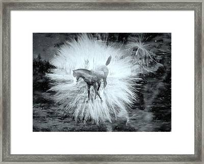 Framed Print featuring the photograph Kicking Up Heels by Kathy Bassett