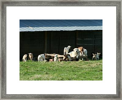 Kid Sitter Framed Print by Linda A Waterhouse