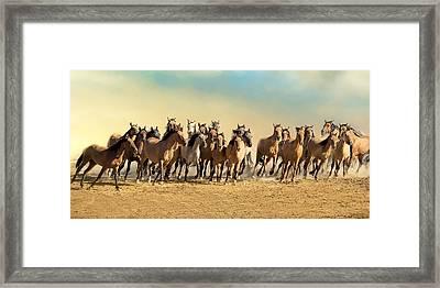 Kiger Mares Framed Print