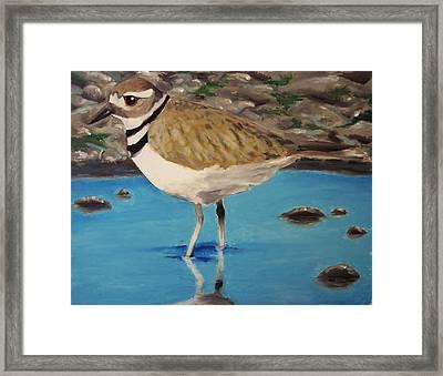 Killdeer In Water Framed Print