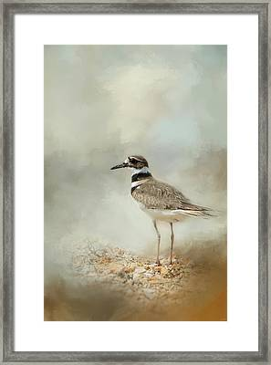 Killdeer On The Rocks Framed Print