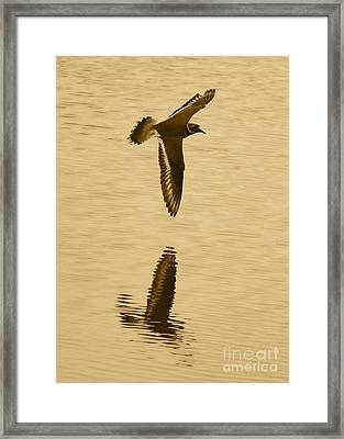 Killdeer Over The Pond Framed Print