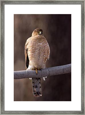 Killer In The Shadows Framed Print by Timothy McIntyre