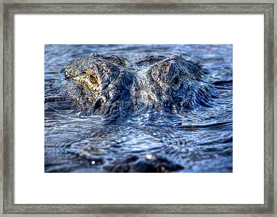 Framed Print featuring the photograph Killer Instinct by Mark Andrew Thomas