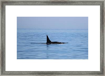 Framed Print featuring the photograph Killer Whale  by Christy Pooschke