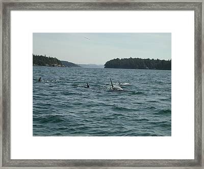 Killer Whales Framed Print