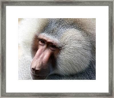 Kind Eyes Framed Print by Don Prioleau