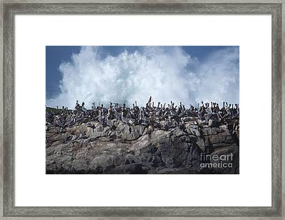 Kinda Crowded Framed Print by Stan and Anne Foster