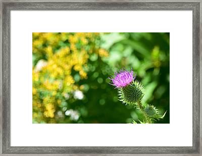 #kindness Framed Print by Becky Furgason