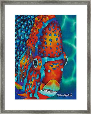 King Angelfish Framed Print