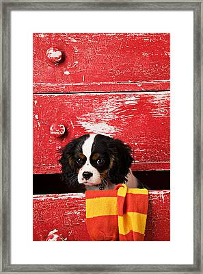 King Charles Cavalier Puppy  Framed Print