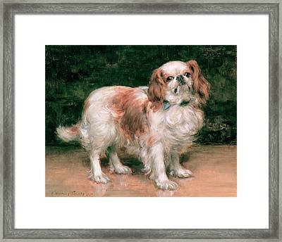 King Charles Spaniel Framed Print by George Sheridan Knowles
