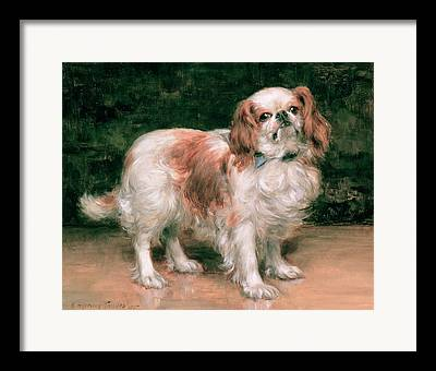 Toy Dog Framed Prints