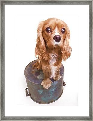 King Charles Spaniel Puppy Framed Print by Edward Fielding