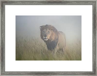 King In The Mist Framed Print