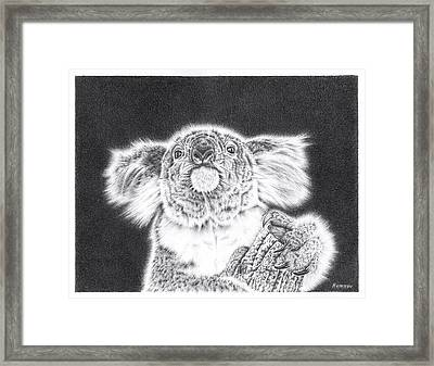 King Koala Framed Print