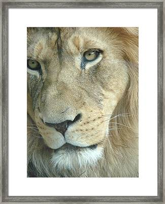 Framed Print featuring the photograph King by Margaret Bobb