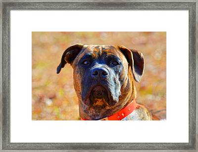 King Of My Home Framed Print by Lisa Wooten
