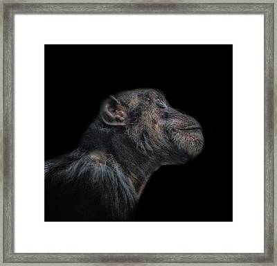 King Of The Apes Framed Print