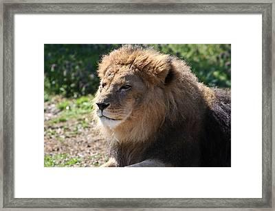 King Of The Beast Framed Print