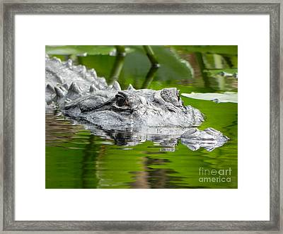 King Of The Florida Jungle Framed Print by Jack Norton