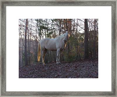King Of The Hill Framed Print by Kristen Hurley