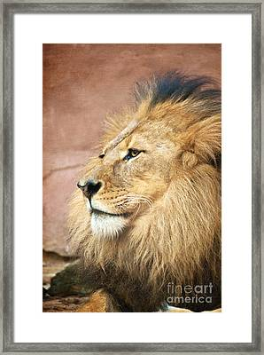 King Of The Jungle Framed Print by Bob and Nancy Kendrick
