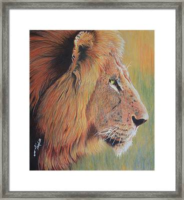 King Of The Jungle Framed Print by Don MacCarthy