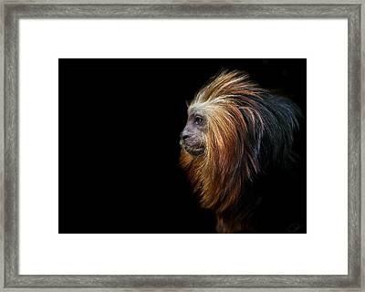 King Of The Jungle Framed Print by Paul Neville