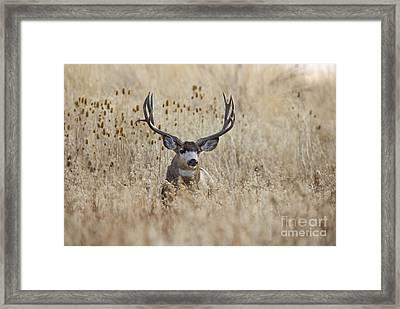 King Of The Marsh Framed Print