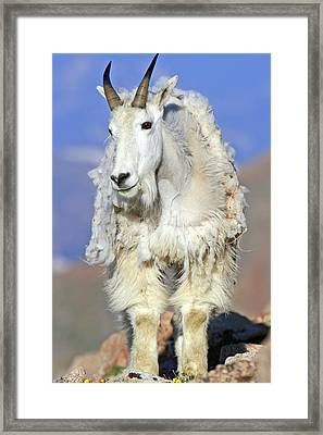 King Of The Mountain Framed Print by Scott Mahon