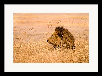 Serengeti Wildlife Framed Prints