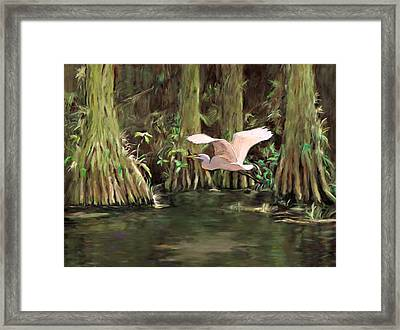 King Of The Swamp Framed Print by David  Van Hulst