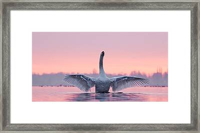 King Of The Water And The Sunset  Framed Print by Roeselien Raimond