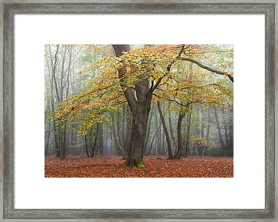 King Of The Woods Framed Print by Chris Dale
