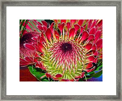 King Protea Framed Print by Michael Durst