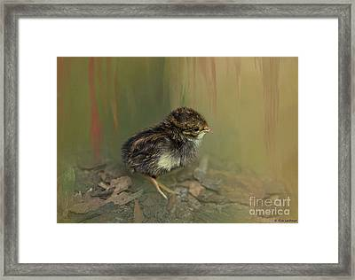 King Quail Chick Framed Print