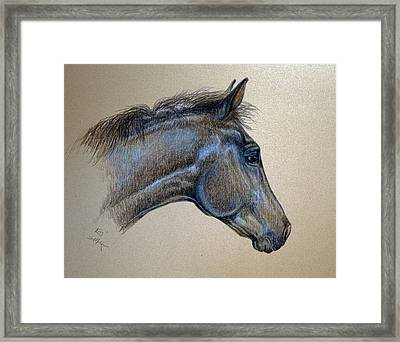 Framed Print featuring the drawing King by Suzanne McKee