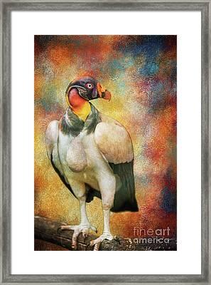 King Vulture Framed Print