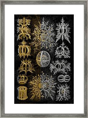 Kingdom Of Silver Single-celled Organisms  Framed Print